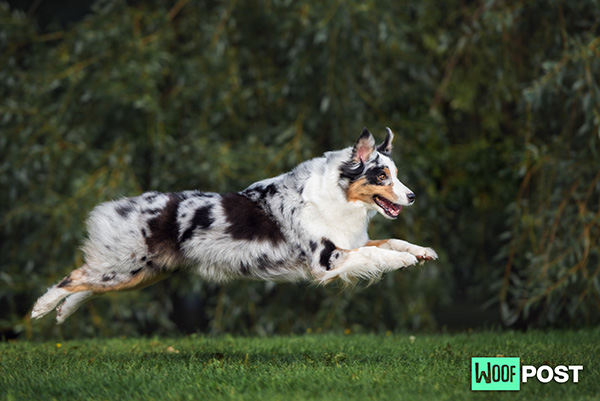 More Little Known Fun Facts About Dogs