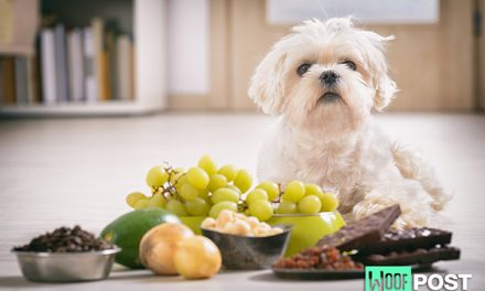 The Deadly Dozen – 12  Foods You Should Never Feed Your Dog – Part One