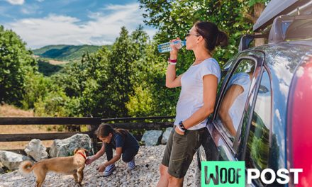 Road Trips With Your Dog – Seven Tips For A Fun and Safe Journey