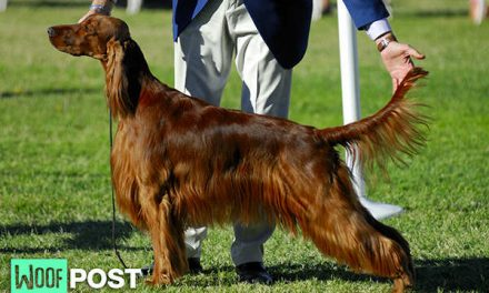 Dog Breeding – A Different Point of View