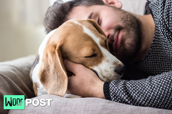 Scientists Admit Your Dog Really Does Love You