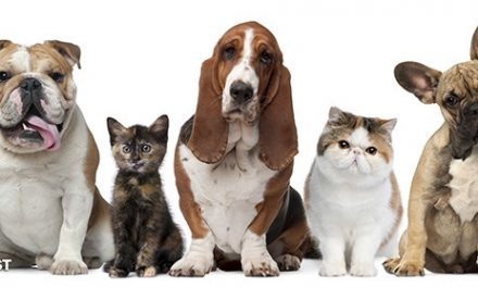 Preference For Dogs Over Cats Likely Due To Your Genes
