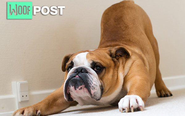 Five Fun Ways To Exercise Your Dog Indoors