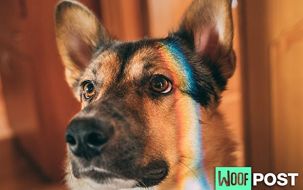 Are Dogs Color Blind? Yes and No