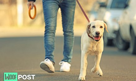 Five Fun Ways To Exercise Your Dog Outdoors