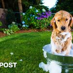 Help! What To Do When Your Dog Gets Sprayed By A Skunk