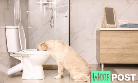 Is Drinking Water From The Toilet Bad For Your Dog?