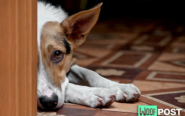 What To Do When Your Dog Is Grieving A Loss