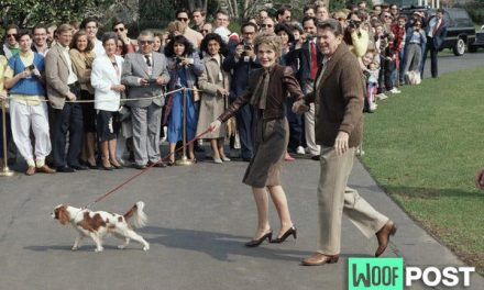 All The Presidents' Dogs