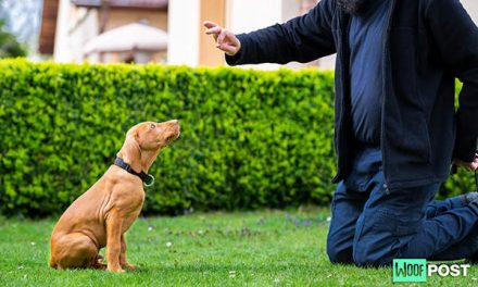 Two Easy Ways To Teach Your Puppy How To Sit On Command