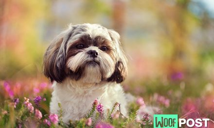 Which 10 Dog Breeds Live The Longest?