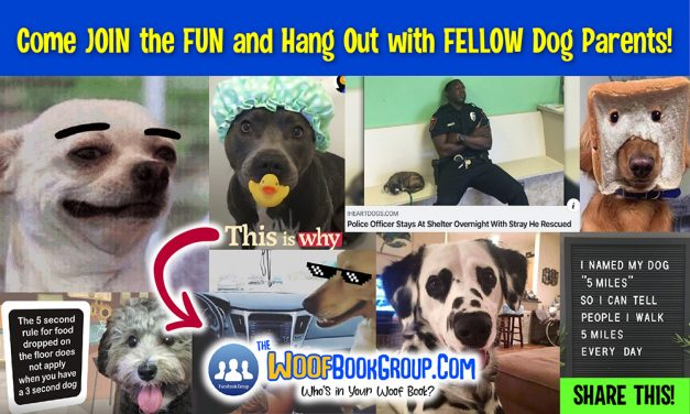 The Woof Book Group