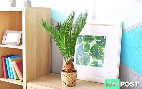 Toxic Beauty – The Sago Palm Is Deadly For Dogs (And Children)