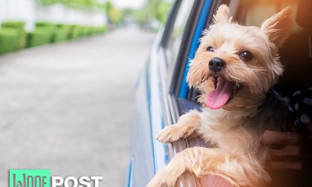 Why You Should Never Let Your Dog Ride With His Head Out The Car Window