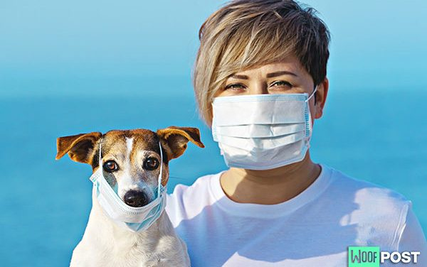 Coronavirus: Could Your Dog Be At Risk?