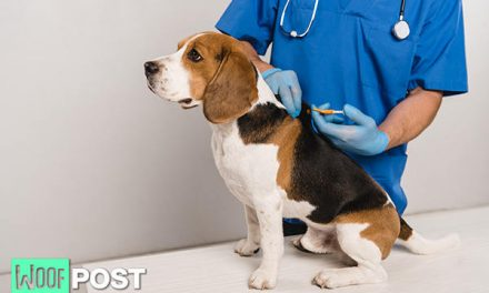 Microchipping Your Dog – Pros and Cons – Part One