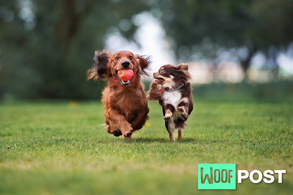 Play Dates For Your Dog – Three Tips To Ensure Success