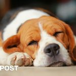 It's A Dog's Life: Why Dogs Sleep So Much