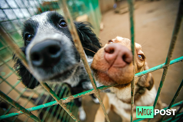 Adopting A Rescue Dog? Five Things To Consider