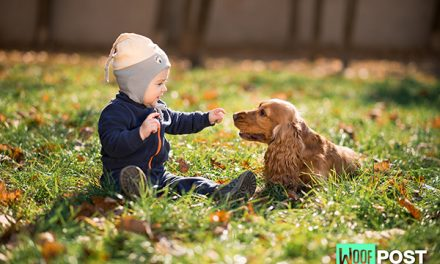 Preschoolers Do Better In Families That Have A Dog