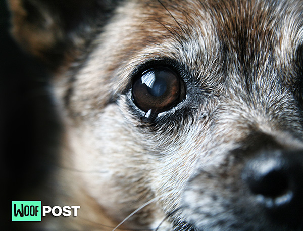 Do Dogs Cry When They Are Sad?
