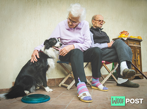 Dogs Can Bring Comfort To Dementia Patients And Their Caregivers