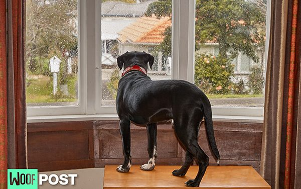 How To Treat Your Dog's Separation Anxiety  – Part 4