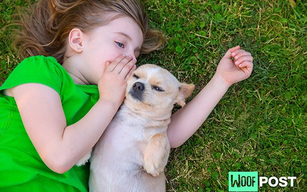 How To Speak Dog – What Is Your Dog Saying When He Barks?