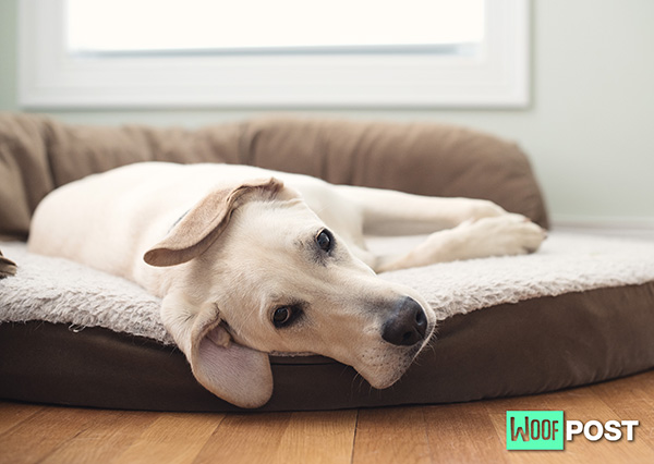 How To Choose The Best Bed For Your Dog