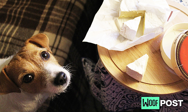 Should You Feed Your Dog Cheese? It Depends!