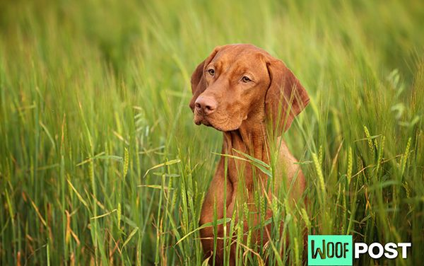 How To Prevent Your Dog From Getting Lyme Disease