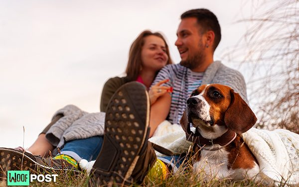 Why Does Your Dog Prefer Your Partner Over You?