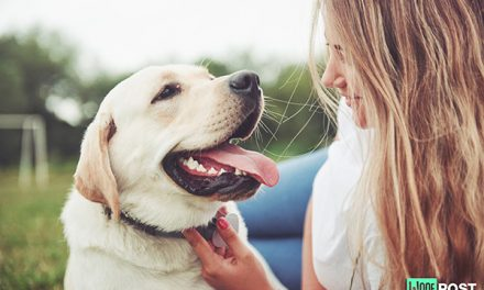 Bad Breath In Dogs – Systemic Causes