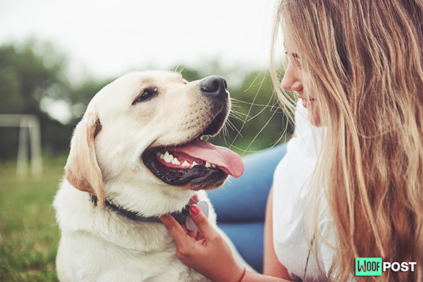 Five Ways To Have A Dog Without Actually Owning One