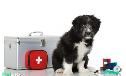 How To Make A First Aid Kit For Your Dog
