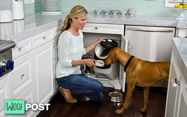 How To Safely Store Your Dog's Food