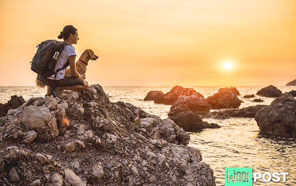 Hiking With Your Dog – 7 Essential Items To Take With You On The Trail