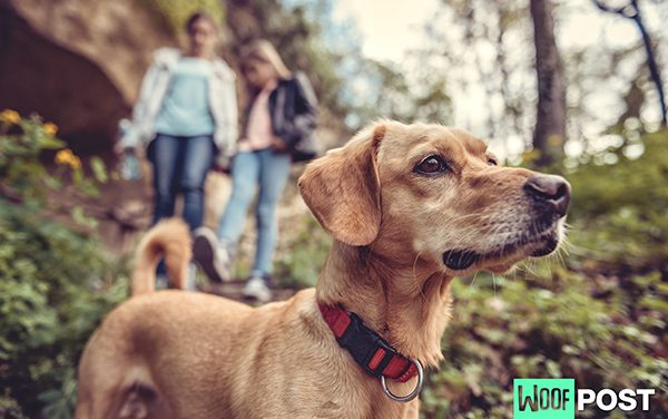 Can Dogs Get Poison Ivy?