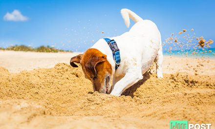 Why Does Your Dog Dig And How To Get Him To Stop