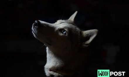 How Well Can Your Dog See In The Dark?
