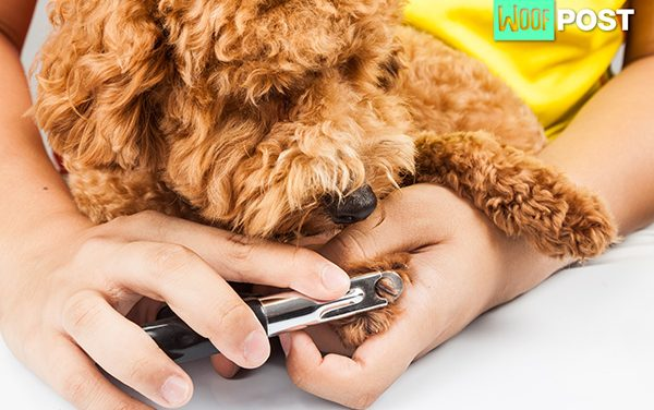 How To Trim Your Dog's Nails – Part Two