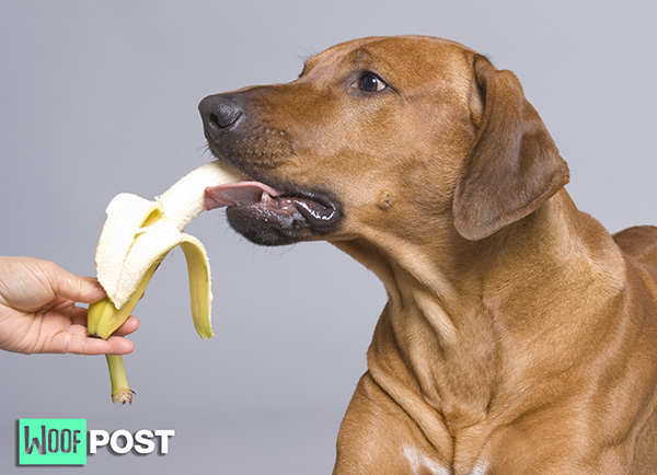 Ten Fruits That Are Safe For Your Dog To Eat