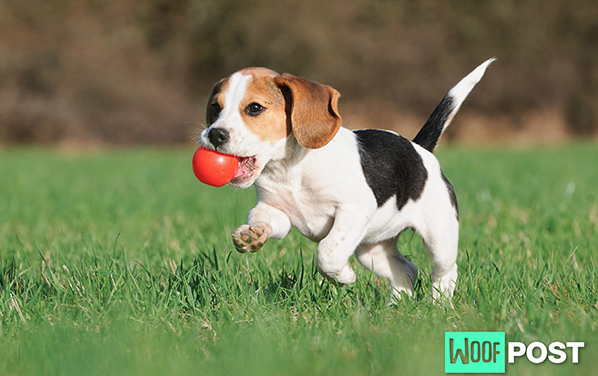 Are Dog Parks Good Places To Socialize A Puppy?