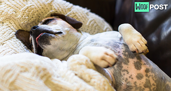 Why Does Your Dog Snore And Should You Be Concerned?