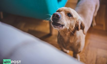 How To Teach Your Dog To Stop Barking