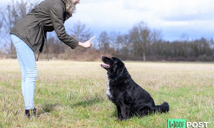 How To Teach Your Dog To Stay – Part One