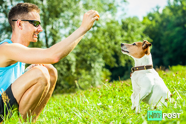The Seven Basic Commands Your Dog Should Know