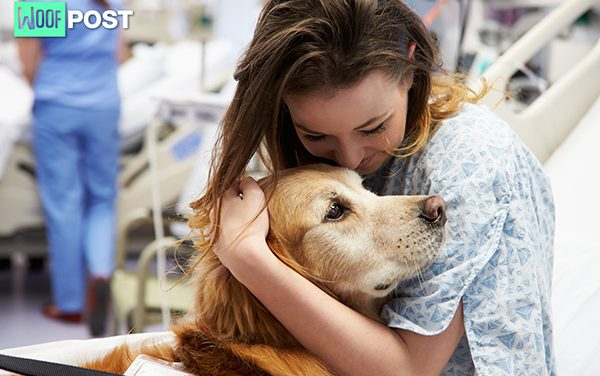 Therapy Dogs – How To Get Your Dog Certified