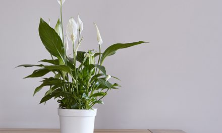 Five Common Houseplants That Are Toxic To Dogs