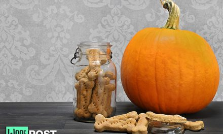 Homemade Peanut Butter Pumpkin Dog Treats